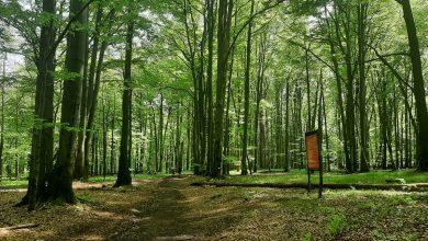 Życzeniu ekologów i społeczników stało się zadość. Las Murckowski został objęty ochroną. Powstanie tu zespół przyrodniczo - krajobrazowy. (fot.UM Katowice)