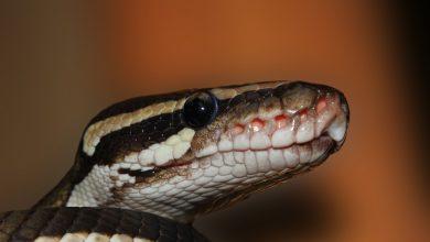UWAGA!!! Pyton na wolności w Katowicach! Służby ostrzegają przed wężem na os.Tysiąclecia! (fot.poglądowe - pixabay.com)