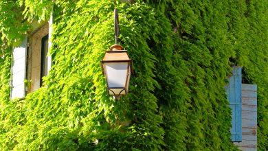 Katowice: Chcesz być zwolniony z podatku od nieruchomości? Stwórz zielony dach lub zieloną fasadę (fot.poglądowe/www.pixabay.com)