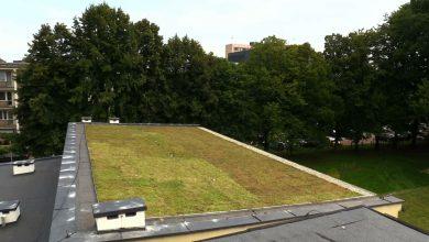 Tychy mają swój pierwszy zielony dach! 190 m2 roślin na dachu szkoły!
