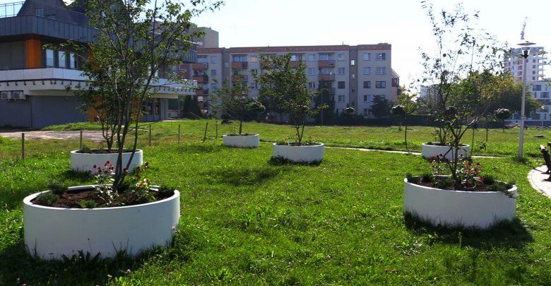Krótko mogli cieszyć się mieszkańcy Tychów widokiem świeżo nasadzonych kwiatów i roślin na tym deptaku łączącym osiedla N i O. Krótko, bo ktoś po prostu je ukradł.