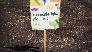 Będzie kolejna łąka kwietna w Katowicach. Fot. UM Katowice